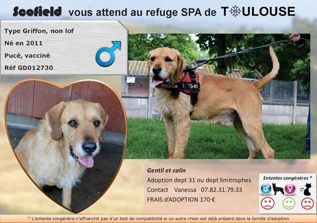 scofield chien adopter dans la r gion midi pyr n es. Black Bedroom Furniture Sets. Home Design Ideas