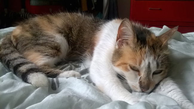 Chat sexe chalons en champagne