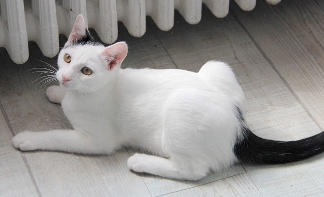 Adopter un chat de 4 ans