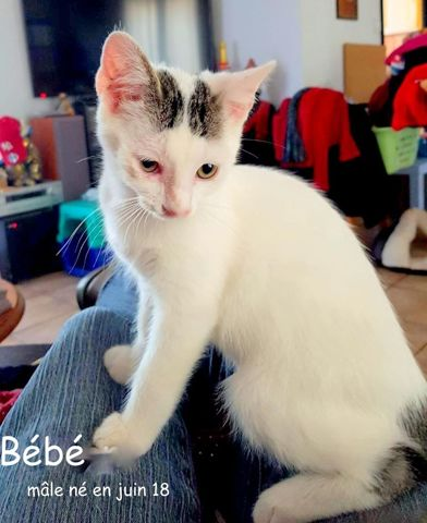 Bebe Chaton A Adopter Dans La Region Aquitaine