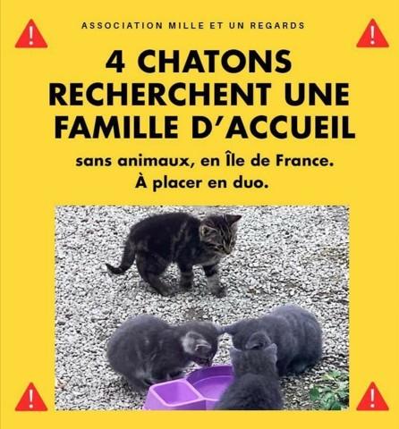 Recherche Fa Urgent Chaton A Adopter Dans La Region Ile De France