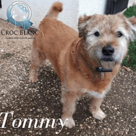 Tommy Adorable Petit Fauve De Bretagne Croise Griffon Chien Griffon Fauve De Bretagne A Adopter Dans La Region Bretagne