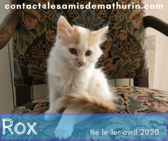 Rox Chaton A Adopter Dans La Region Ile De France