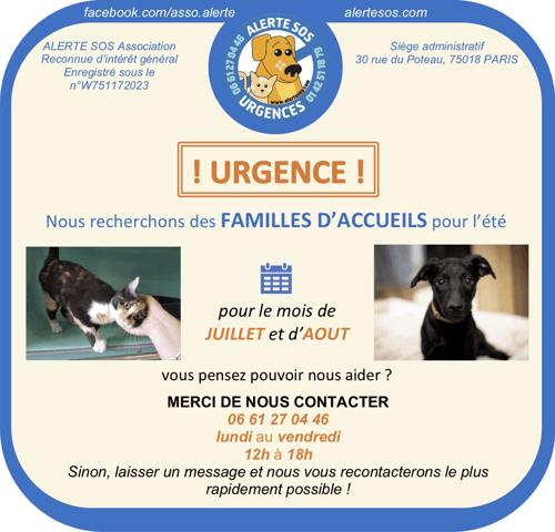 Cherche Famille D Accueil Meme Temporaie Sur Region Parisienne Chaton A Adopter Dans La Region Ile De France