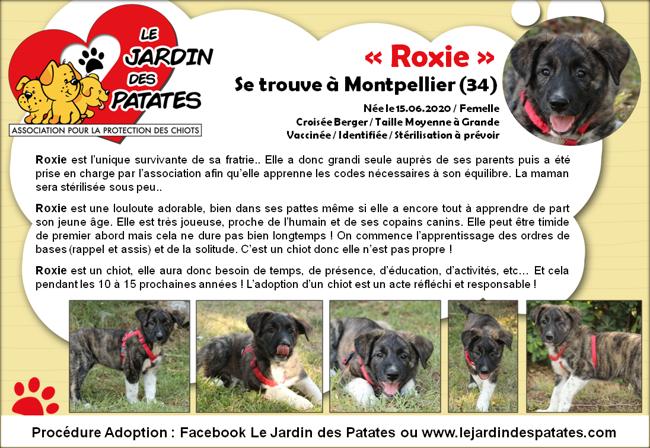 Roxie Chiot A Adopter Dans La Region Languedoc Roussillon