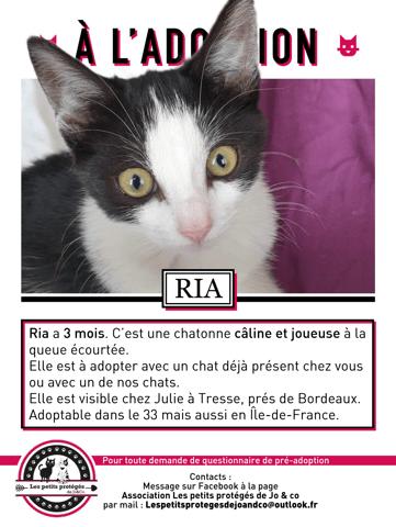 Ria Chaton A Adopter Dans La Region Aquitaine