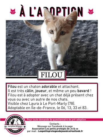 Filou Chaton A Adopter Dans La Region Ile De France