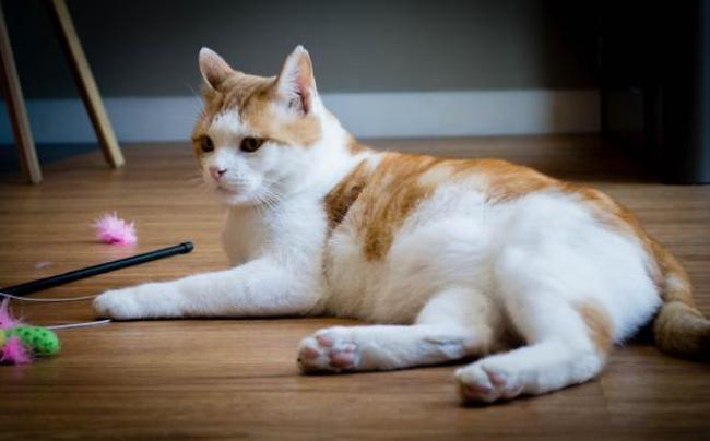 major chat adopter dans la r gion aquitaine. Black Bedroom Furniture Sets. Home Design Ideas