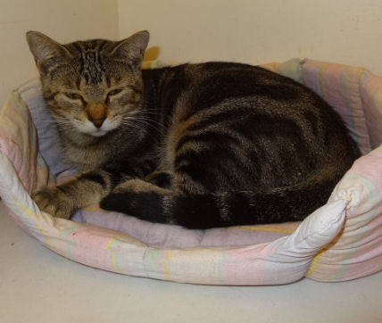 Les chats - Page 13 Chat-chat-de-maison-adopter-68732