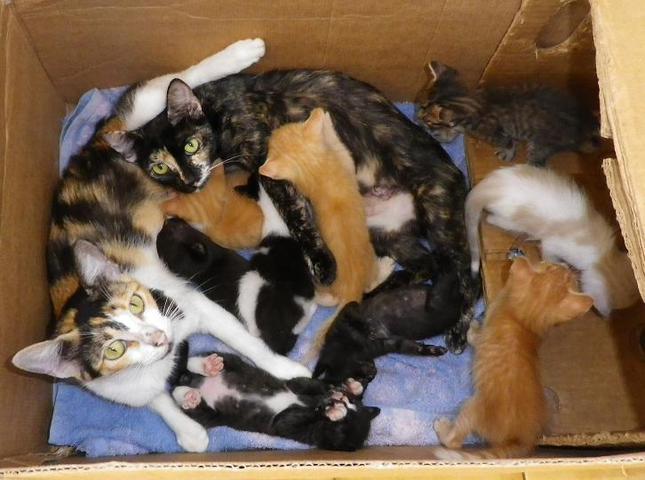 grand sos pour beaucoup de chats chat chat de maison adopter dans la r gion dom tom. Black Bedroom Furniture Sets. Home Design Ideas