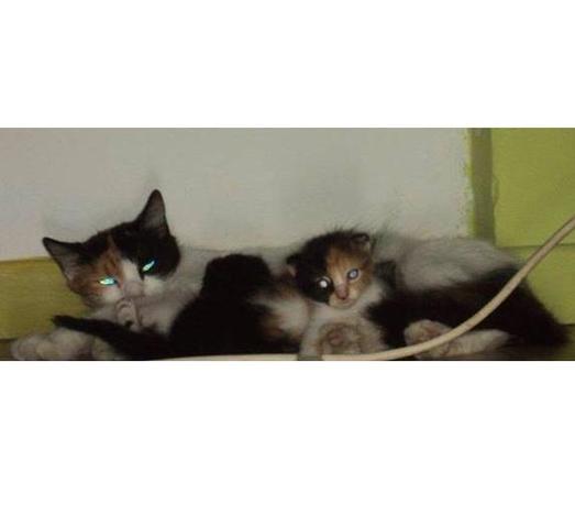 chat sx couple femme salope