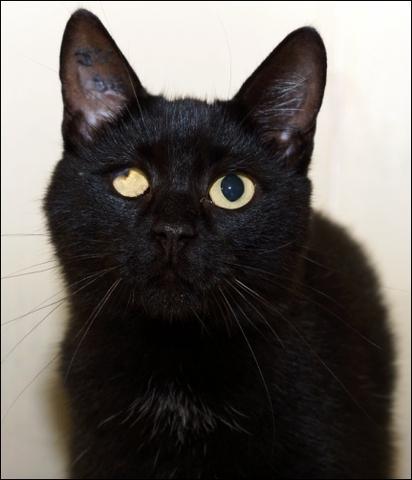 atia chat chat de maison adopter dans la r gion ile de. Black Bedroom Furniture Sets. Home Design Ideas