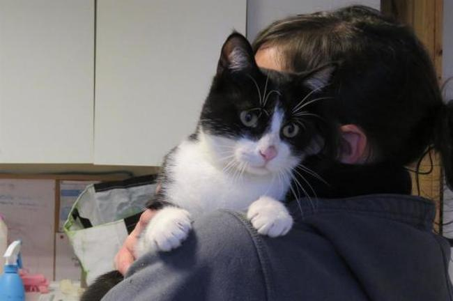 basile chat sites Aujourd'hui nous nous interrogeons sur l'origine du conte du chat botté pour tout le monde c'est ce cher charles perrault qui en le  dans la version de basile,.