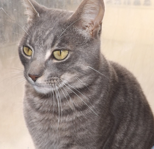 Chat chateauroux