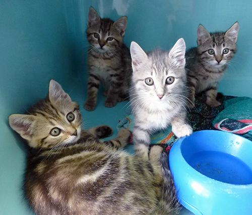 chatons m les femelles chaton europ en adopter dans la r gion rh ne alpes. Black Bedroom Furniture Sets. Home Design Ideas