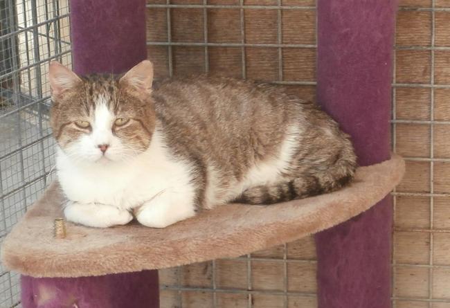 Krema : chat européen à adopter dans la région Champagne ... Selkirk Rex Atlanta
