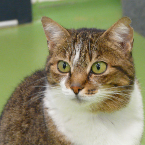 Chat sexe annecy