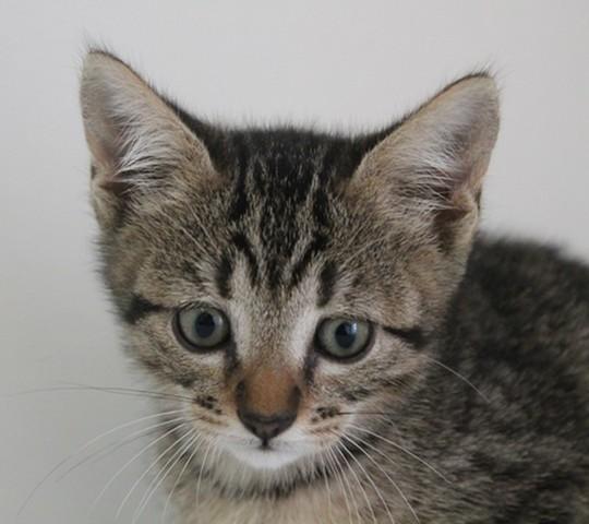 chat en Thionville