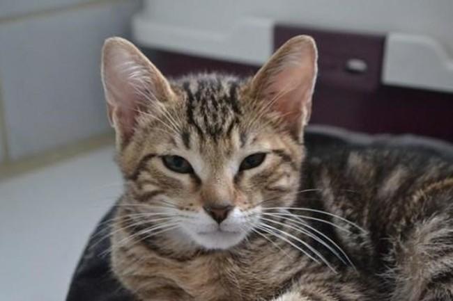 furious chaton chaton europeen adopter dans la r gion rh ne alpes. Black Bedroom Furniture Sets. Home Design Ideas