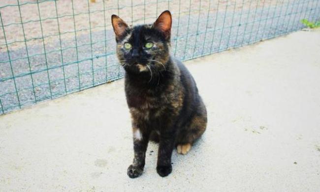 coquine chat europeen adopter dans la r gion centre. Black Bedroom Furniture Sets. Home Design Ideas
