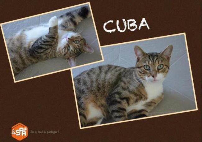 Cuba chat
