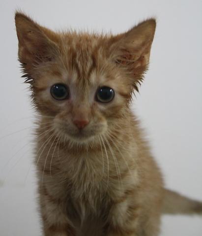 chat Nouméa