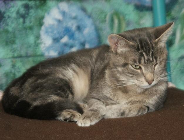 neuneuille chat europ en adopter dans la r gion pays de la loire. Black Bedroom Furniture Sets. Home Design Ideas