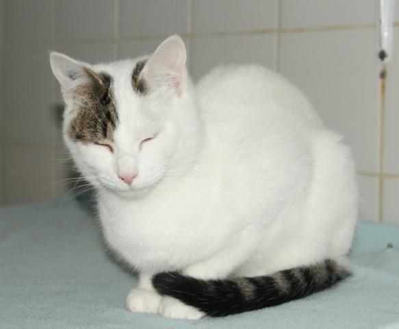 soda chat europ en adopter dans la r gion pays de la loire. Black Bedroom Furniture Sets. Home Design Ideas