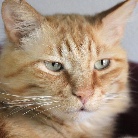 chat fort de france