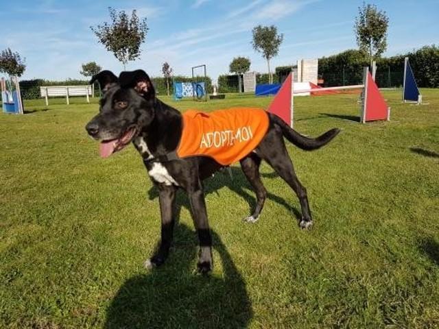 Zita : chien à adopter dans la région Poitou Charentes