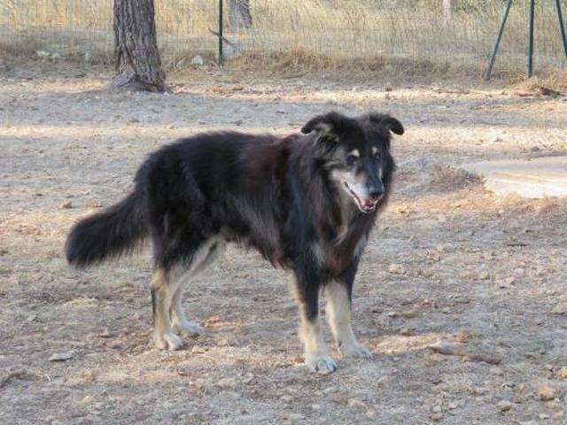 rex chien berger adopter dans la r gion provence alpes c te d 39 azur. Black Bedroom Furniture Sets. Home Design Ideas