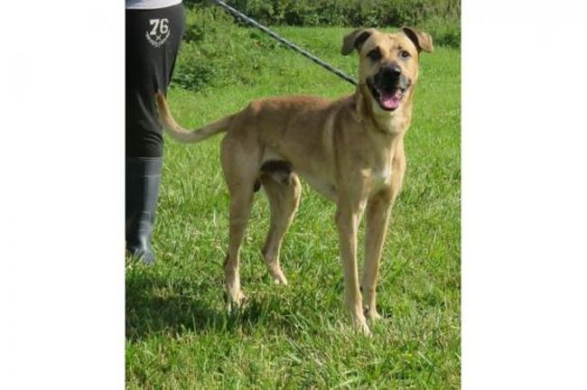 Beaune vaa20639 : chien berger à adopter dans la région
