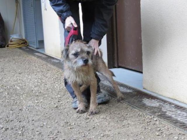 Edy Chien Border Terrier A Adopter Dans La Region Rhone Alpes