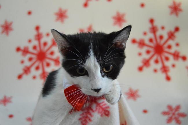 calais chat Offrez a votre chat un sejour dans un cadre familial rassurant et l'expertise d'une pension professionnelle plus de 300 matous satisfaits.