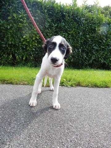 Yana : chiot chien créole à adopter dans la région Haute