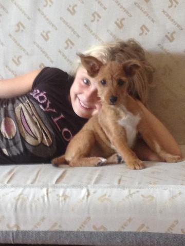 joulio chiot chien crois petit race adopter dans la r gion rh ne alpes. Black Bedroom Furniture Sets. Home Design Ideas