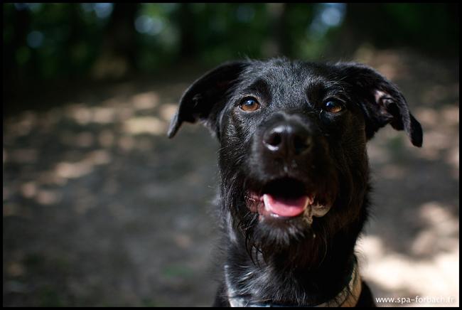 Princesse chiot chien crois petit race adopter dans - Race chien volt ...