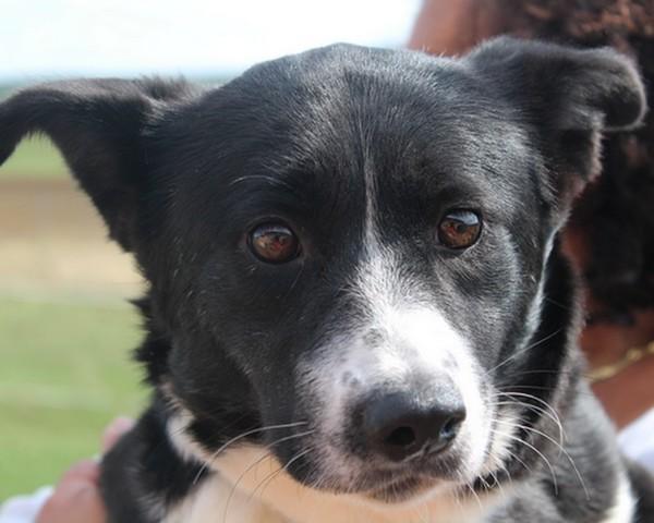Iljala reservee chien chien ours de car lie adopter - Race chien volt ...