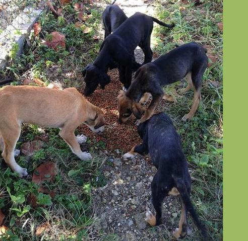 Reste 2 chiots sur 5 3 transf r s hermeray chien for Acote salon boston
