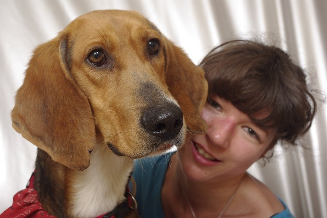 joyeux excellent chien de compagnie pour une famille chien crois anglo francais adopter. Black Bedroom Furniture Sets. Home Design Ideas