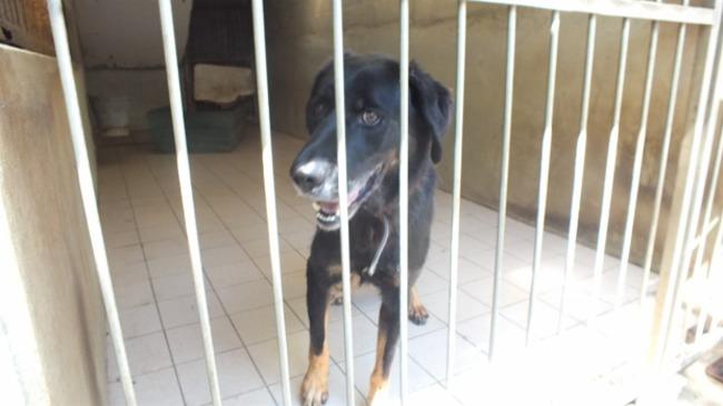ICEO - x berger 8 ans (8 ans de refuge)  Spa de Tulle à Chameyrat (19) Chien-croise-autre-berger-adopter-272371