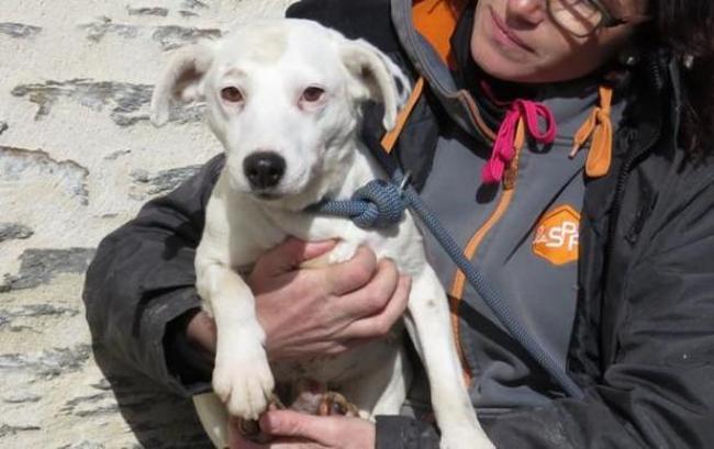 FOGg - x jack russel 8 ans - Spa de Clion sur Mer (44) Chien-croise-autre-jack-russel-terrier-adopter-360067-4