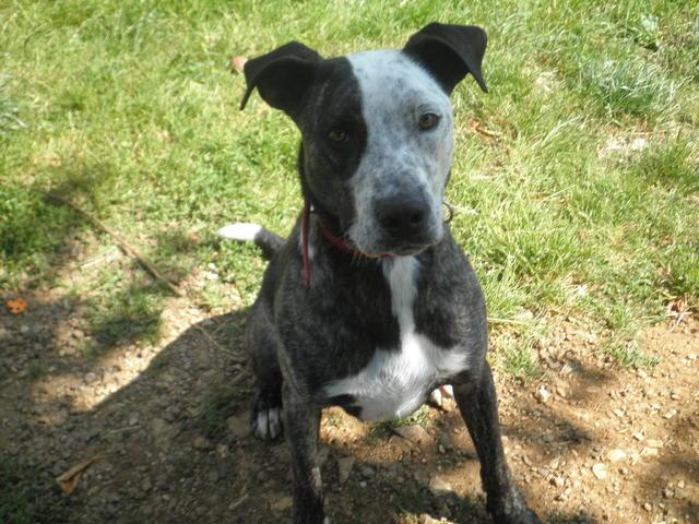 kayser 130545 chien crois233 boxer 224 adopter dans la