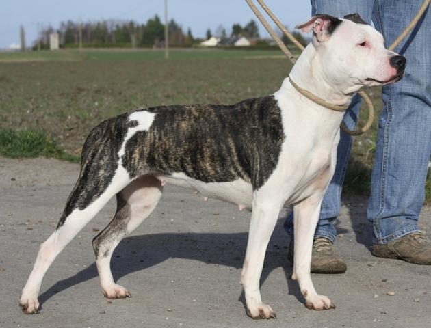 West La Dog Adoption