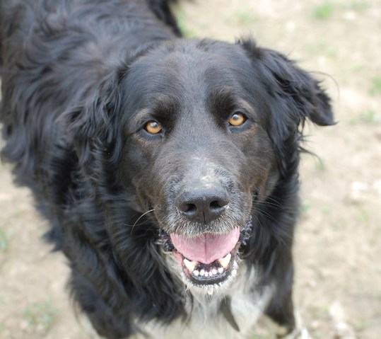 l o sauvetage senior chien crois epagneul adopter dans la r gion rh ne alpes. Black Bedroom Furniture Sets. Home Design Ideas