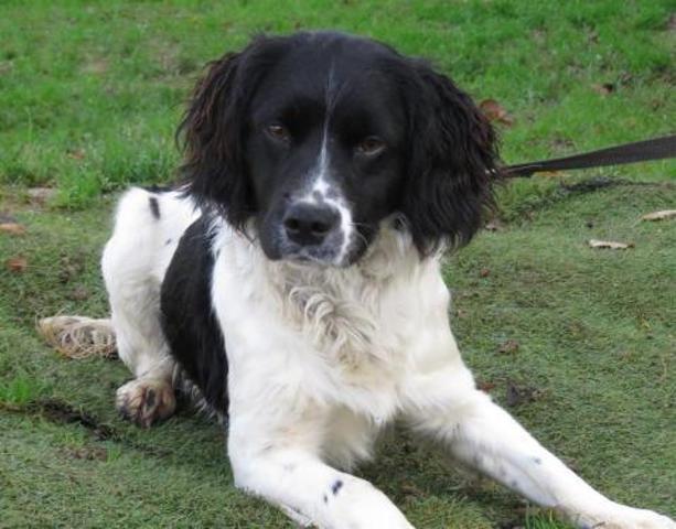 Acqua digio chao7350 chien epagneul adopter dans la for Acqua salon boston