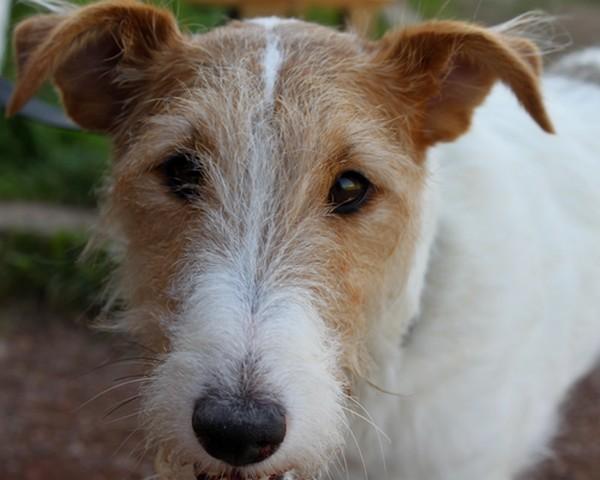 Races chien: Annuaire des races de chiens (race chien) sur un seul site!