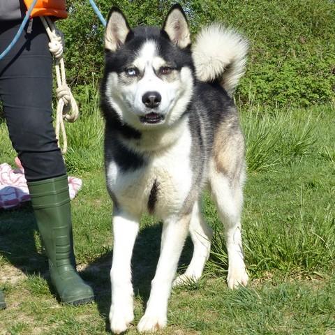 Kiara - Une vrai chienne franaise pour des coups de bite