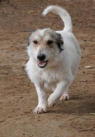 joy chien race commune adopter dans la r gion rh ne alpes. Black Bedroom Furniture Sets. Home Design Ideas