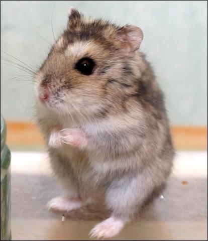 le sexe de hamster Vidéos de sexe